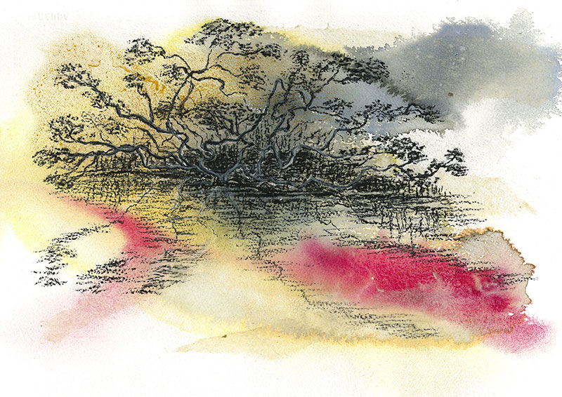 Judy Henry, Mangroves on the Myall River, 2014, mixed media, acrylic, charcoal on paper, 38 x 28.5 cm