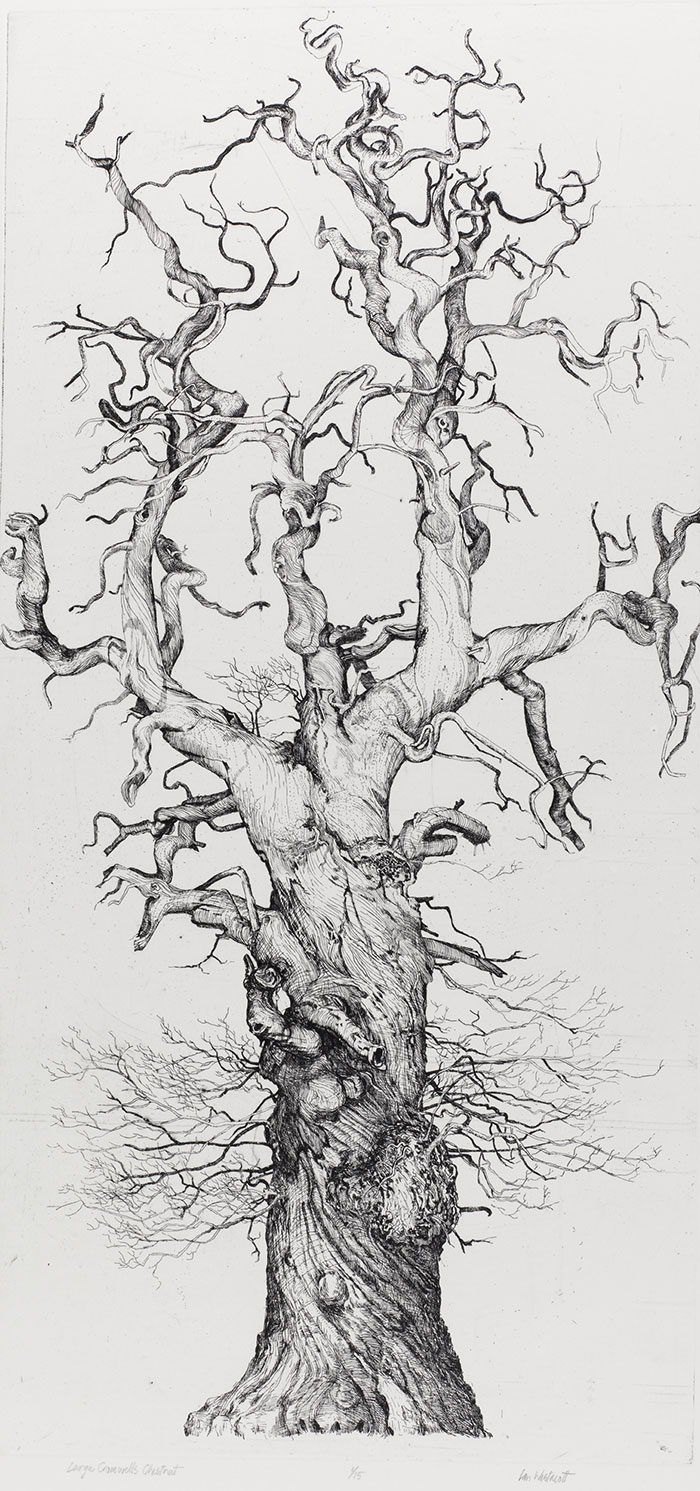 Ian Westacott, Large Cromwell's Chestnut, 2007 etching, 61x30cm