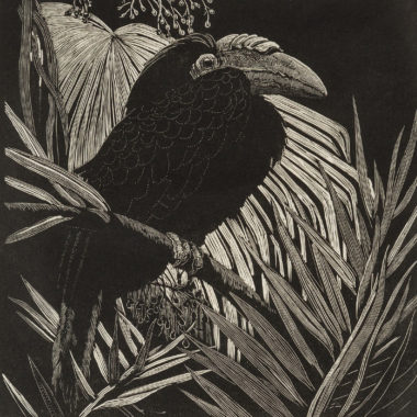 Lionel Lindsay, Hornbill, 1932, wood engraving, printed in black ink on paper, 14 x 14cm