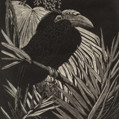Lionel Lindsay, Hornbill, 1932, wood engraving, printed in black ink on paper, 14 x 14cm